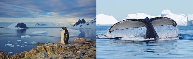 Zwei Bilder von Markus Eichenberger, die in der Antarktis entstanden sind.