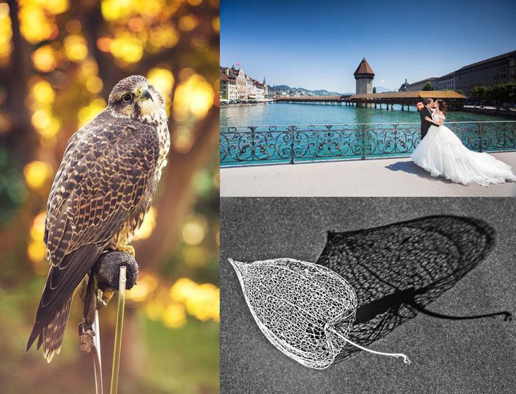 """Pressebild PHOTOSTREAM OLTEN #14; links: EIn Greifvogel-Bild von Annika Bütschi, rechts oben: Ein Hochzeitsbild von Cornelius Fischer, rechts unten: """"Schatten"""" von AARSO-Mitglied Heinz Schaub."""